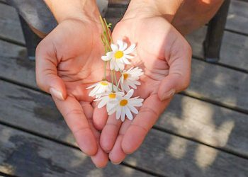 hands-with-daisies-2